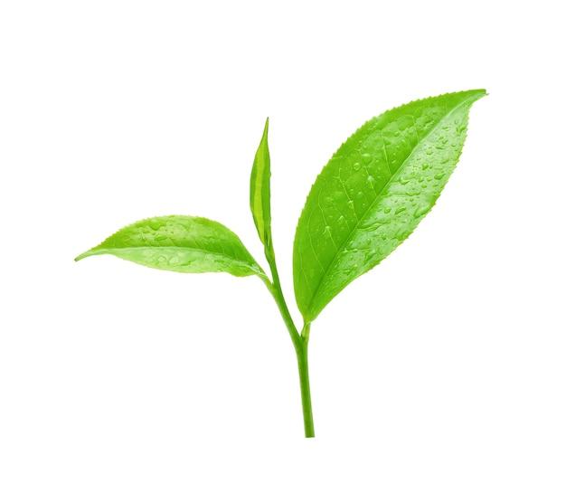 Bladeren verse groene thee met druppels water op wit wordt geïsoleerd.