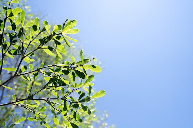Bladerenbomen op blauwe hemelachtergrond