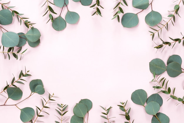 Bladerenkader met verse eucalyptusbladeren die op roze vlakke achtergrond worden geïsoleerd, leggen en hoogste mening