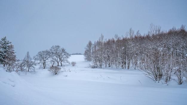 Bladerloze boom in de winter