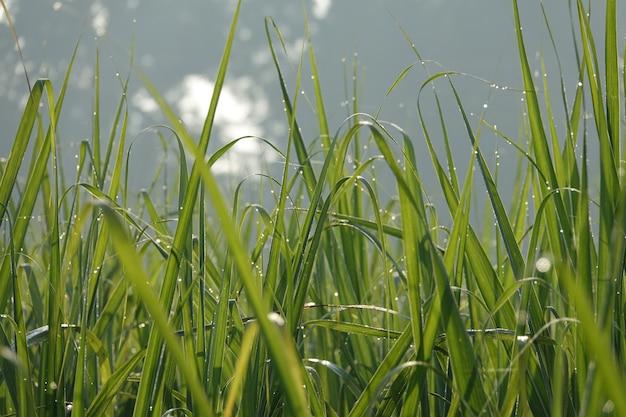 Blades van gras met hemel achtergrond