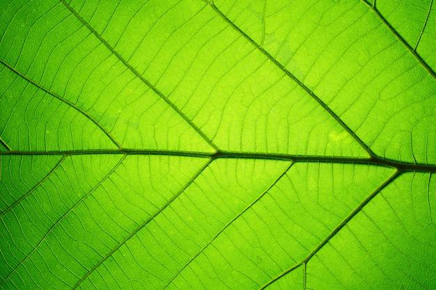 Bladtextuurpatroon voor de lente, textuur van groene bladeren