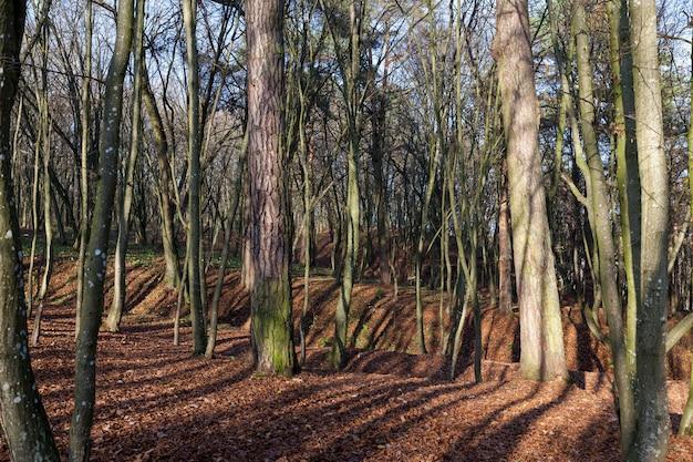 Bladverliezend gebladerte en bladeren op de takken van bomen in het herfstseizoen, prachtige natuur in het herfstseizoen in het bos