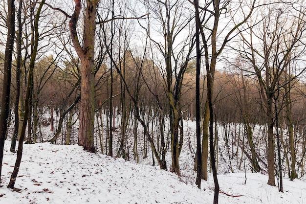 Bladverliezende bomen zonder blad in de winter. op de grond drijft sneeuw na een sneeuwval
