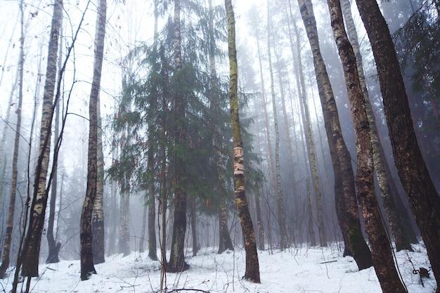 Bladverliezende wouden in de vroege winter bij mistig weer.