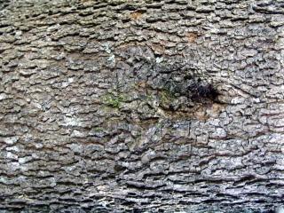Blaffen de verkeerde boom