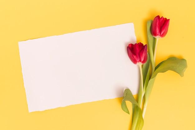 Blanco papier met rode tulp bloemen op gele oppervlak