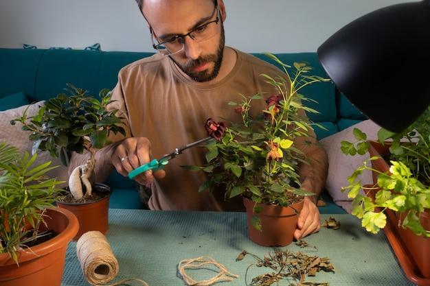 Blanke man met bril snoeien en verzorgen van kamerplanten