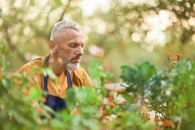 Blanke man van middelbare leeftijd aan het werk met planten