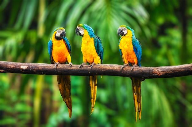 Blauw-en-gele ara in het bos