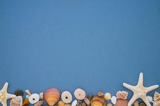 Blauw oppervlak met zee-egels en andere mariene elementen