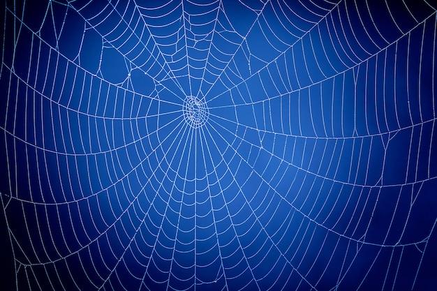 Blauw spinnenweb. wereldwijd communicatieconcept.