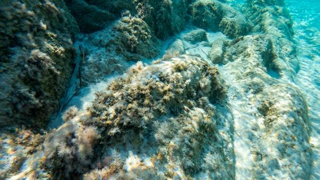 Blauw transparant water van een zee nabij de kust, zicht onder water, rotsen met mos en vissen