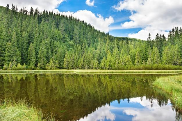 Blauw water in een bosmeer met pijnbomen