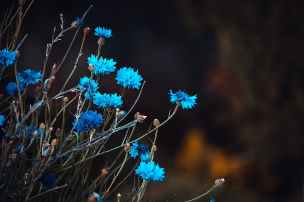 Blauwe bloemen in de natuur