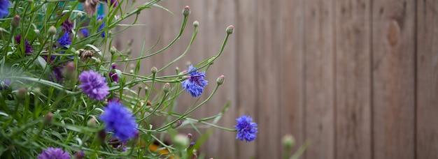 Blauwe bloemen korenbloemen groeien in de buurt van een oud houten hek, focus op het middelste plan