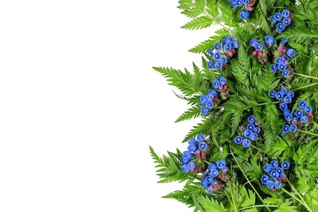 Blauwe bloemen met groene varen op een witte achtergrond.