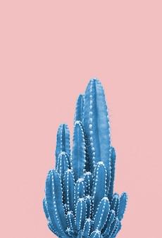 Blauwe cactus op roze achtergrond