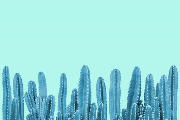 Blauwe cactus op turkooise achtergrond