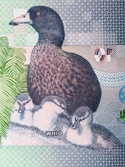 Blauwe eend - whio een portret van nieuw-zeelandse geld