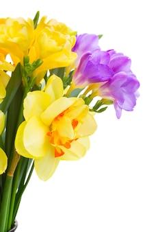 Blauwe en gele freesia en gele narcis bloemen geïsoleerd op een witte achtergrond