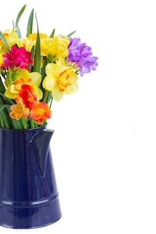 Blauwe en gele freesia en narcis bloemen in blauwe pot close-up geïsoleerd op een witte achtergrond