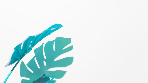 Blauwe en groene monsterabladeren op witte achtergrond