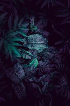 Blauwe en kleurrijke plantenbladeren getextureerd in de natuur in de herfst