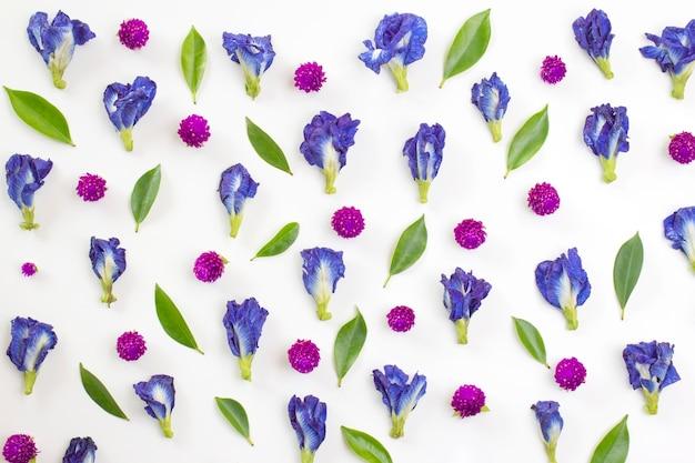 Blauwe erwt en globe amaranth bloemen op witte achtergrond. plat leggen, bovenaanzicht.