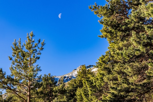 Blauwe hemel met overdag halve maan en groene bomen. la morcuera, madrid.