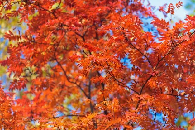 Blauwe hemel onder boomtoppen in een herfst park