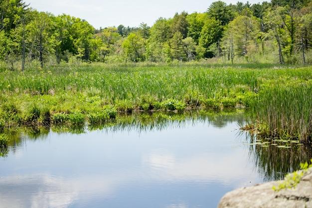 Blauwe hemel weerspiegeld op een meer met planten met bos bomen