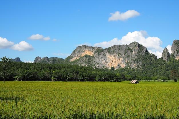 Blauwe hemelberg met groene landbouwbedrijfrijst.