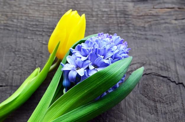 Blauwe hyacint en gele tulp op oude houten achtergrond met exemplaarruimte. de achtergrond van de lente. selectieve nadruk.