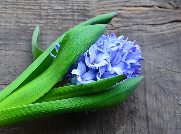 Blauwe hyacint op oude houten achtergrond met exemplaarruimte. de bloem van de hyacintlente. de achtergrond van de lente. selectieve nadruk.