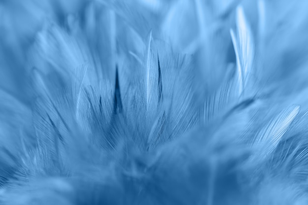 Blauwe kippenveren in zacht en vervagen stijl voor achtergrond