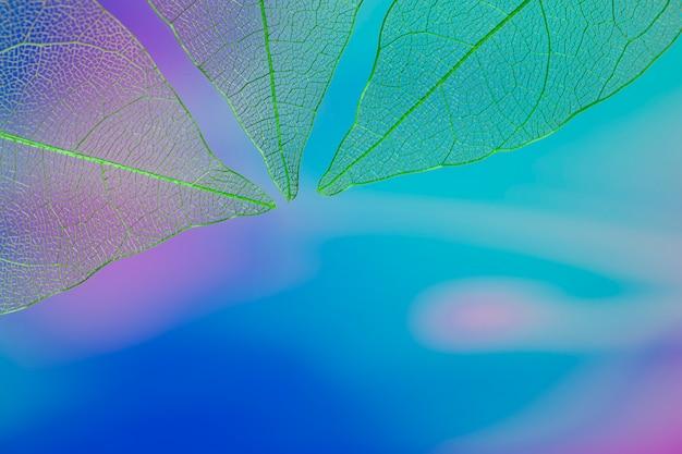 Blauwe kleurrijke bladeren met kopie ruimte
