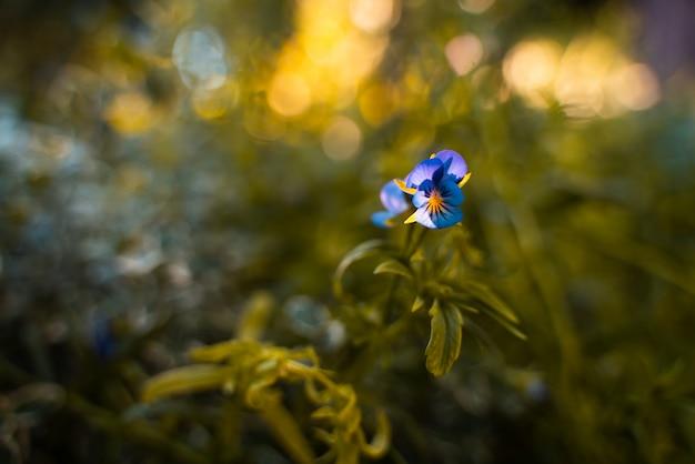 Blauwe korenbloem op een achtergrond van gras en andere korenbloemen