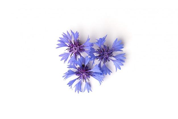 Blauwe korenbloemen die op wit worden geïsoleerd