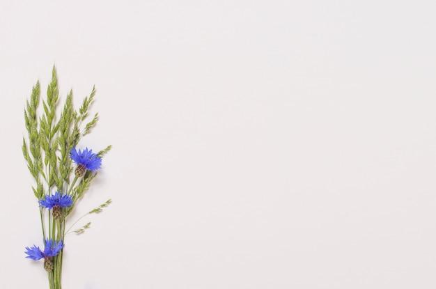 Blauwe korenbloemen op witte ondergrond