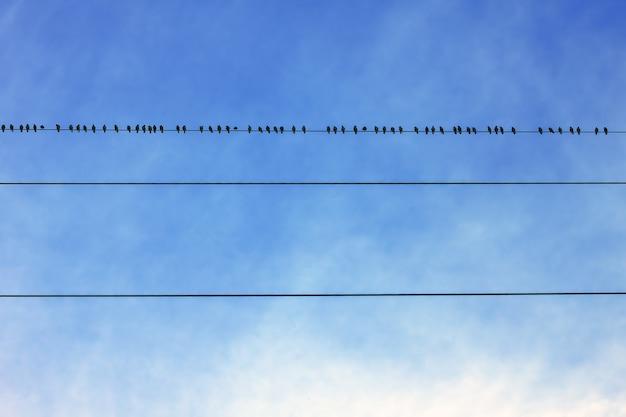 Blauwe lucht en kleine vogels