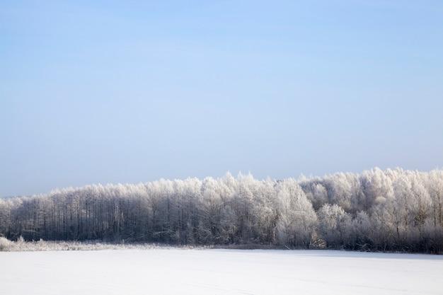 Blauwe lucht en zonnig weer, loofbomen na sneeuwval en vorst, takken bedekt met sneeuw en ijs, koud ijzig winterweer, bomen zonder gebladerte