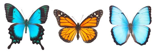 Blauwe morpho, monarch en sea green swallowtail vlinders geïsoleerd op wit