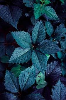 Blauwe plant bladeren in de tuin