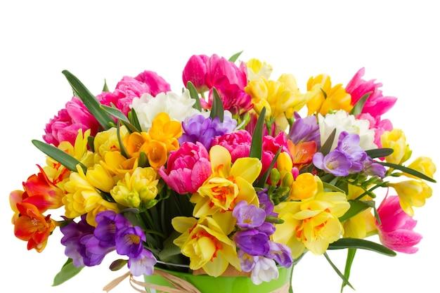 Blauwe, roze en gele fresia en narcis bloemen close-up geïsoleerd op een witte achtergrond