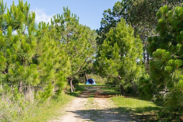 Blauwe tent aan het einde van de weg in het park