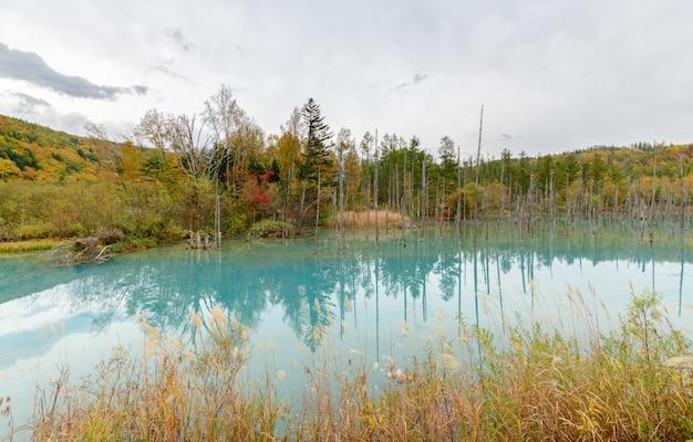 Blauwe vijver (aoiike) in biei, hokkaido herfst seizoen