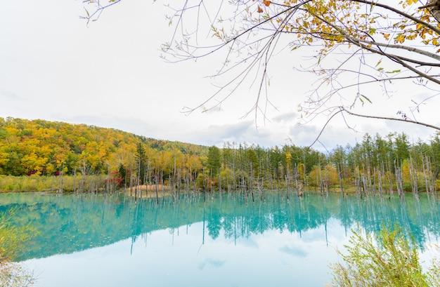 Blauwe vijver (aoiike) in biei, hokkaido herfstseizoen,