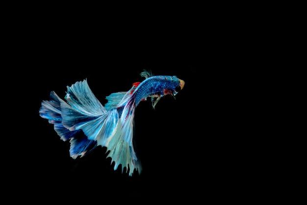 Blauwe vis geïsoleerd op zwarte achtergrond