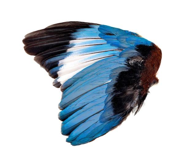 Blauwe vleugels geïsoleerd op witte achtergrond